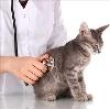 Ветеринарные клиники в Никольске